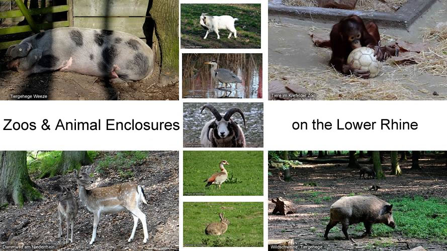 Zoos Animal Enclosures