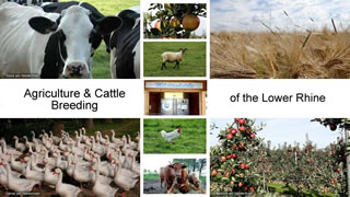 Agriculture & Cattle Breeding