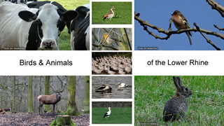 Animals & Birds Lower Rhine