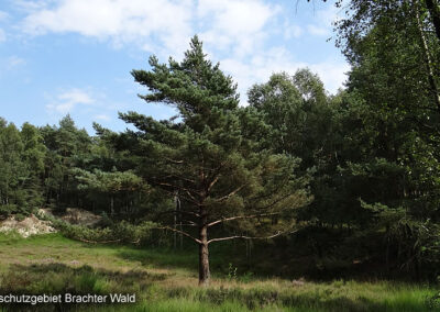 Nature Reserve Brachter Forest