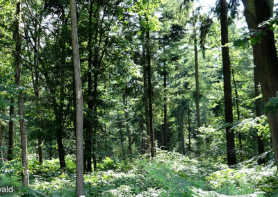 Forest Ketelwald