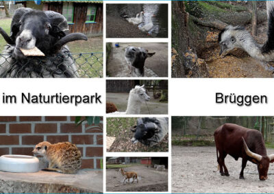 Nature and Animal Park Brueggen